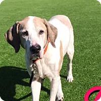 Adopt A Pet :: DUKE - West Palm Beach, FL