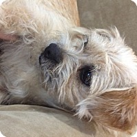 Adopt A Pet :: Gwenevere - Castro Valley, CA