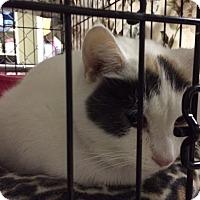 Adopt A Pet :: Eaglet - Byron Center, MI