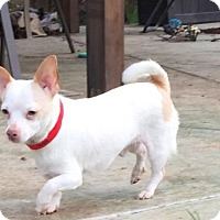 Adopt A Pet :: Ziggy - Vacaville, CA
