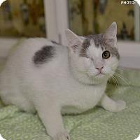 Adopt A Pet :: Nino - Medina, OH