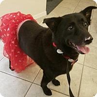 Adopt A Pet :: Lulu - Tampa, FL