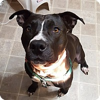 Adopt A Pet :: Sheba - Roanoke, VA