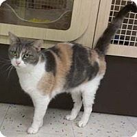 Adopt A Pet :: Gina - Merrifield, VA