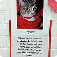 Adopt A Pet :: Princess 2 - Whitestone, NY