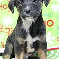 Adopt A Pet :: Bishop - Wytheville, VA
