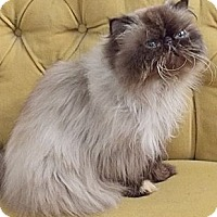 Adopt A Pet :: Heloise - Davis, CA