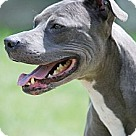 Adopt A Pet :: Sloane