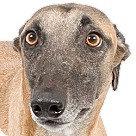 Adopt A Pet :: Grumpy