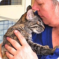 Adopt A Pet :: Catarina - Davis, CA