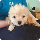 Adopt A Pet :: Tristan