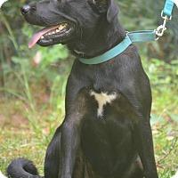 Adopt A Pet :: Star - Daleville, AL
