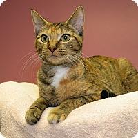 Adopt A Pet :: Sonya - Milford, MA