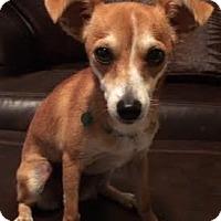 Adopt A Pet :: Rylie - San Antonio, TX