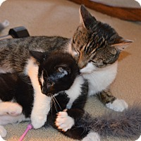 Adopt A Pet :: Charity and Kohl - Colmar, PA