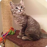 Adopt A Pet :: Ashton - Woodstock, ON