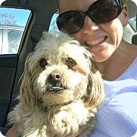 Adopt A Pet :: Stan! - Redondo Beach, CA