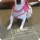 Adopt A Pet :: Cherry Pie