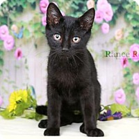 Adopt A Pet :: Ralphie - Sterling Heights, MI