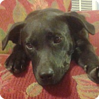 Adopt A Pet :: Lisa Needs foster for recovery - fayetville, NC