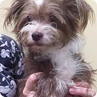 Adopt A Pet :: Gia - Oswego, IL