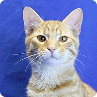 Adopt A Pet :: Bryndon - Winston-Salem, NC