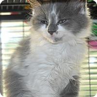 Adopt A Pet :: Boho - Anderson, SC