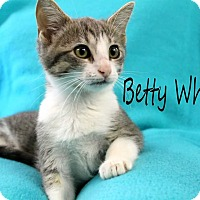 Adopt A Pet :: Betty White - Wichita Falls, TX