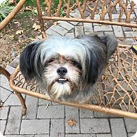 Adopt A Pet :: LUNA - Paramus, NJ