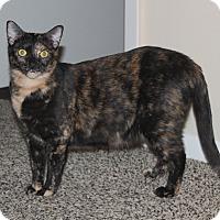 Adopt A Pet :: Zeena - Nolensville, TN