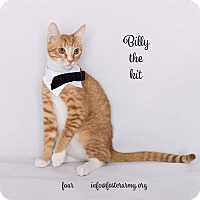 Adopt A Pet :: Billy the Kit - Riverside, CA