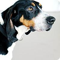 Adopt A Pet :: Jethro *FOSTER* - Appleton, WI