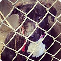 Adopt A Pet :: Julie - Minneapolis, MN