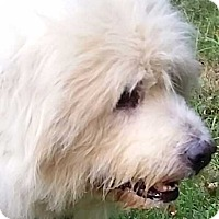Adopt A Pet :: Wolfie - new! - Beacon, NY
