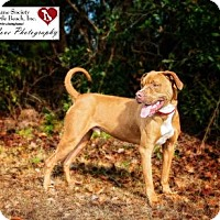 Adopt A Pet :: Eli - North Myrtle Beach, SC