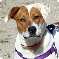 Adopt A Pet :: Dragon - Loxahatchee, FL