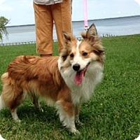 Adopt A Pet :: Kirby - Charlottesville, VA