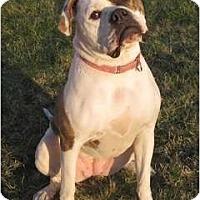 Adopt A Pet :: Bam Bam - Roy, WA
