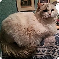 Adopt A Pet :: Matilda - Harrisburg, NC