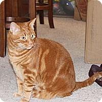 Adopt A Pet :: Max - Laguna Woods, CA