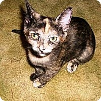 Adopt A Pet :: Paisley - Kirkwood, DE