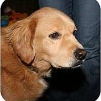 Adopt A Pet :: Bradley - Scottsdale, AZ