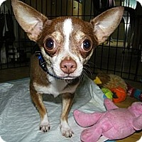 Adopt A Pet :: Diego - South Amboy, NJ