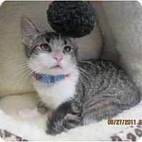 Adopt A Pet :: Tiara - Sterling Hgts, MI