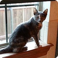 Adopt A Pet :: Prentice - Yukon, OK