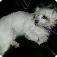 Adopt A Pet :: Kissy - Sacramento, CA