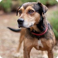 Adopt A Pet :: Serena - Wilmington, DE