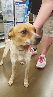 Australian Cattle Dog Mix Dog for adoption in Fresno, California - Rocky