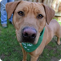 Adopt A Pet :: Bogey - Darlington, SC