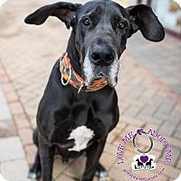 Adopt A Pet :: Charlie - Huntersville, NC